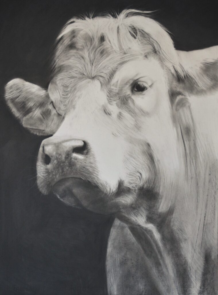 """Cow [No.31]"" Charcoal on paper 
