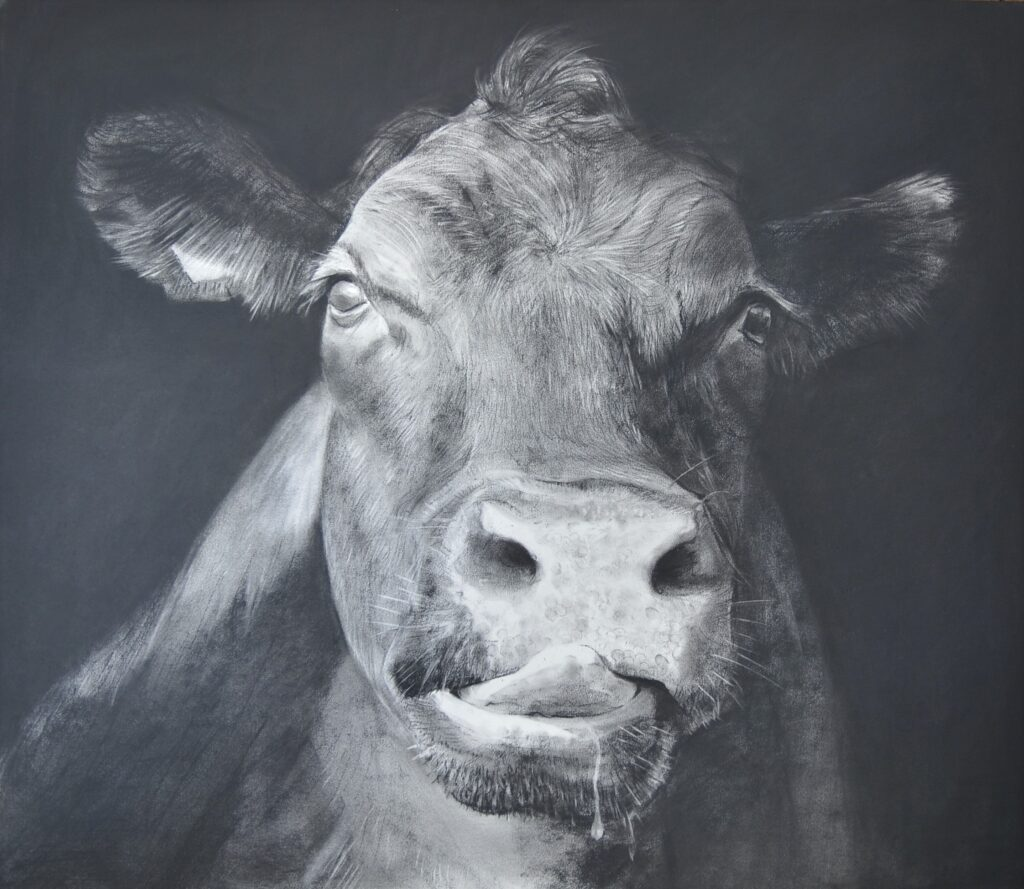 """Cow XXI"" Charcoal on paper 