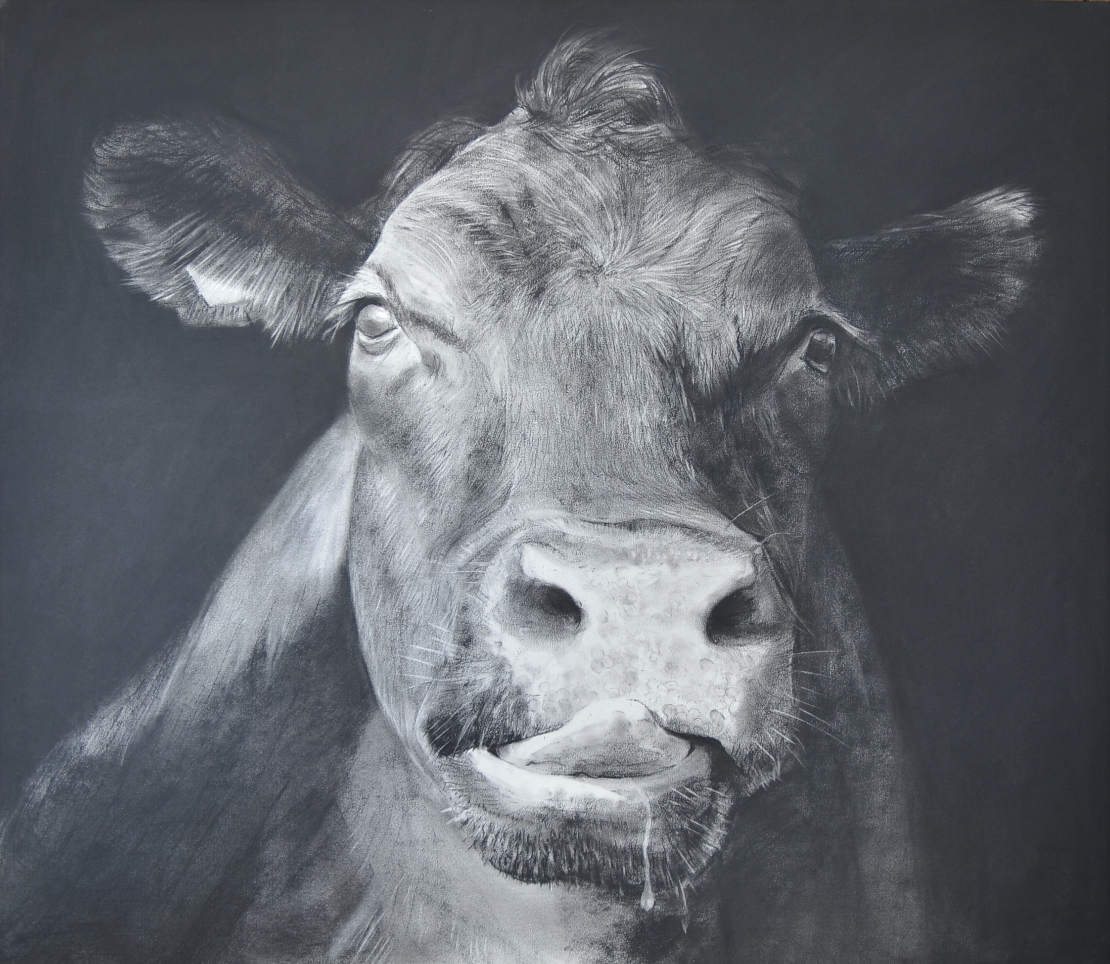 Charcoal drawing of a cow