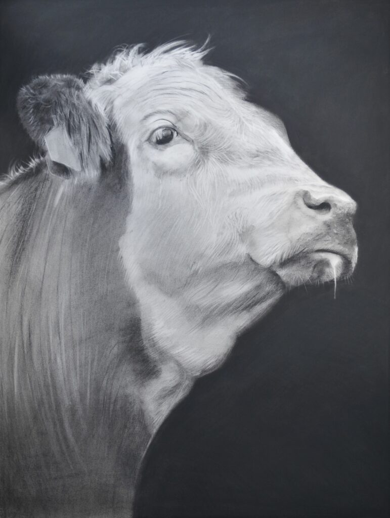 """Cow XXII"" Charcoal on paper 