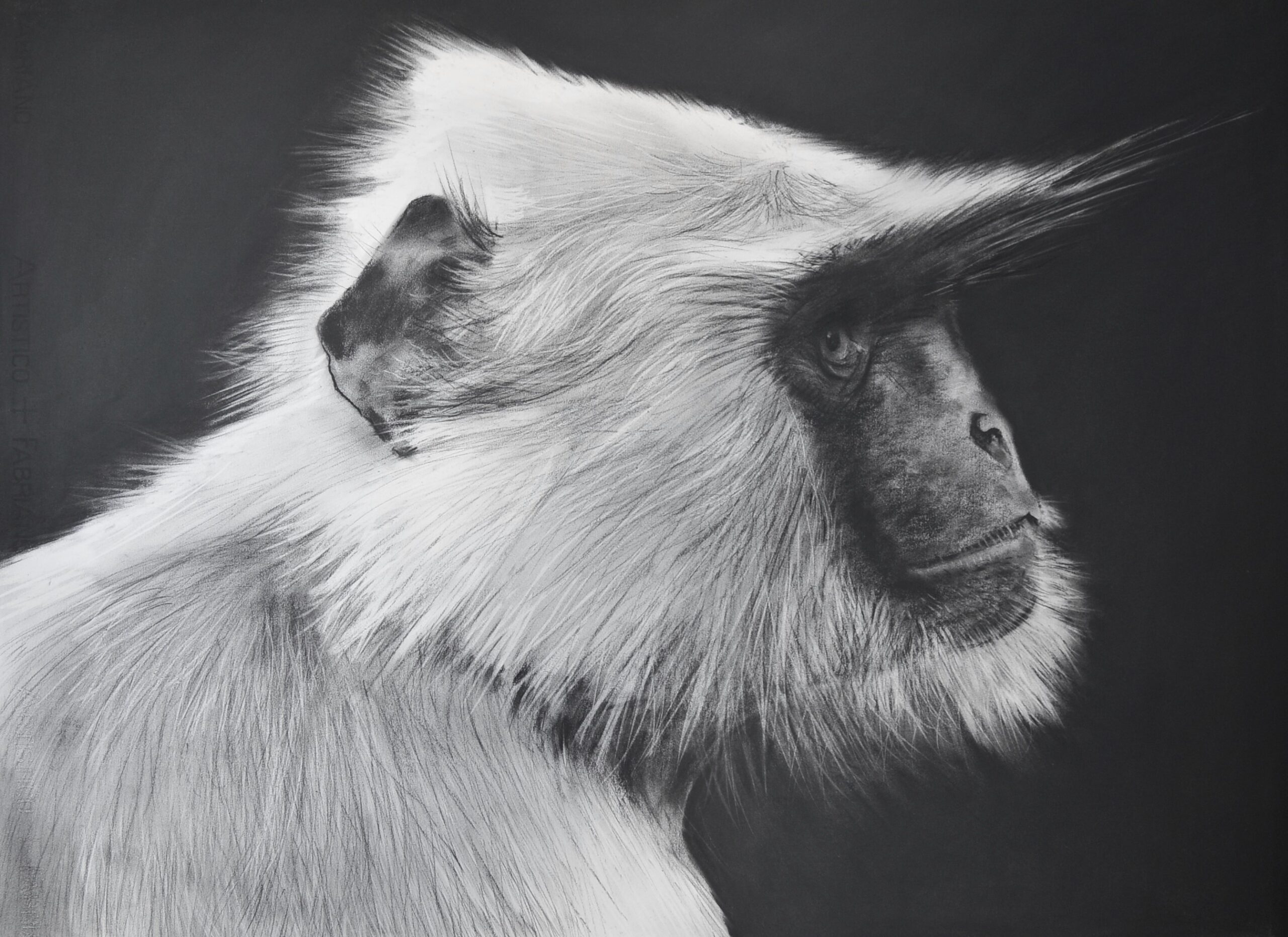 Charcoal drawing of a langur monkey