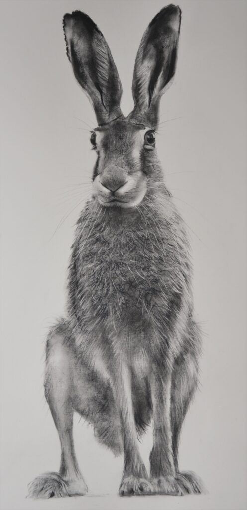 """Hare [No.25]"" Charcoal on paper 