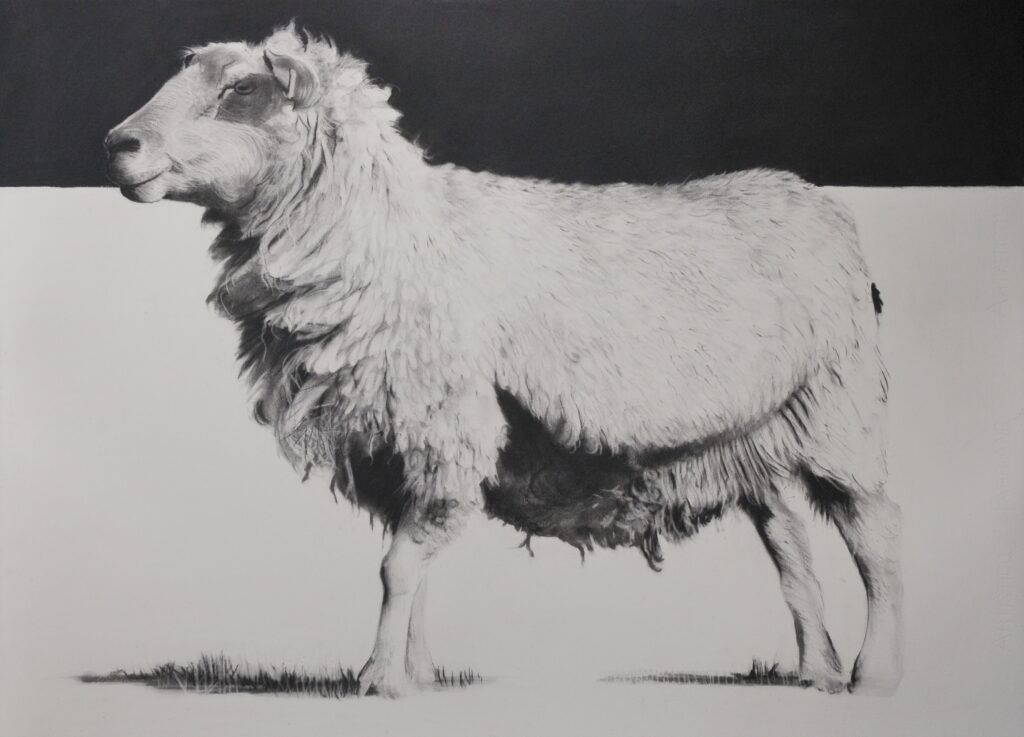 """Heaviside Sheep"" Charcoal on paper 