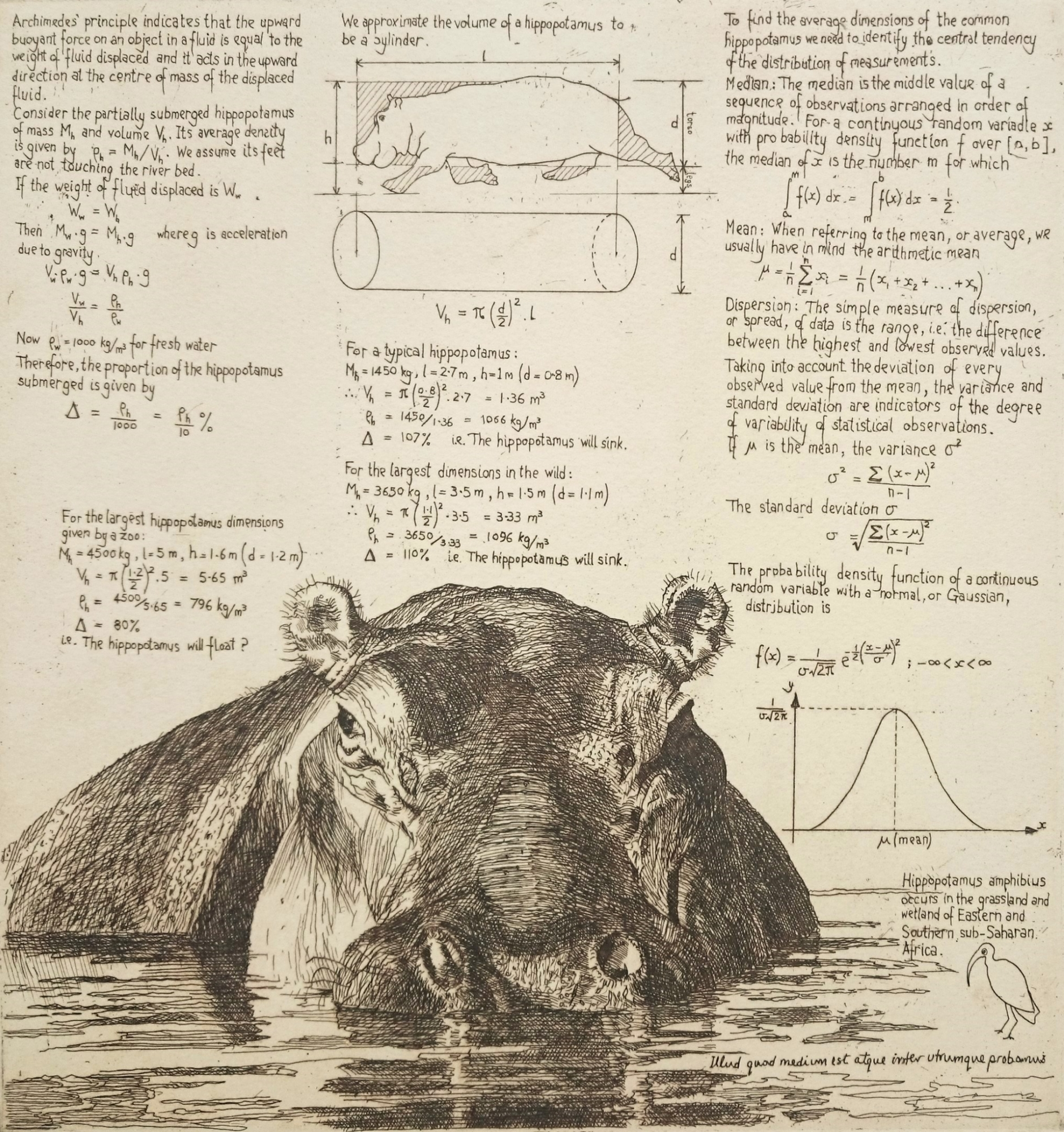 Etching of hippopotamus with notes on buoyancy