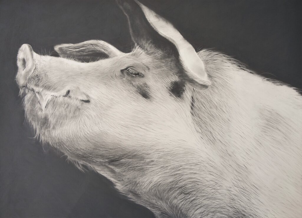 """Pig [No.5]"" Charcoal on paper 