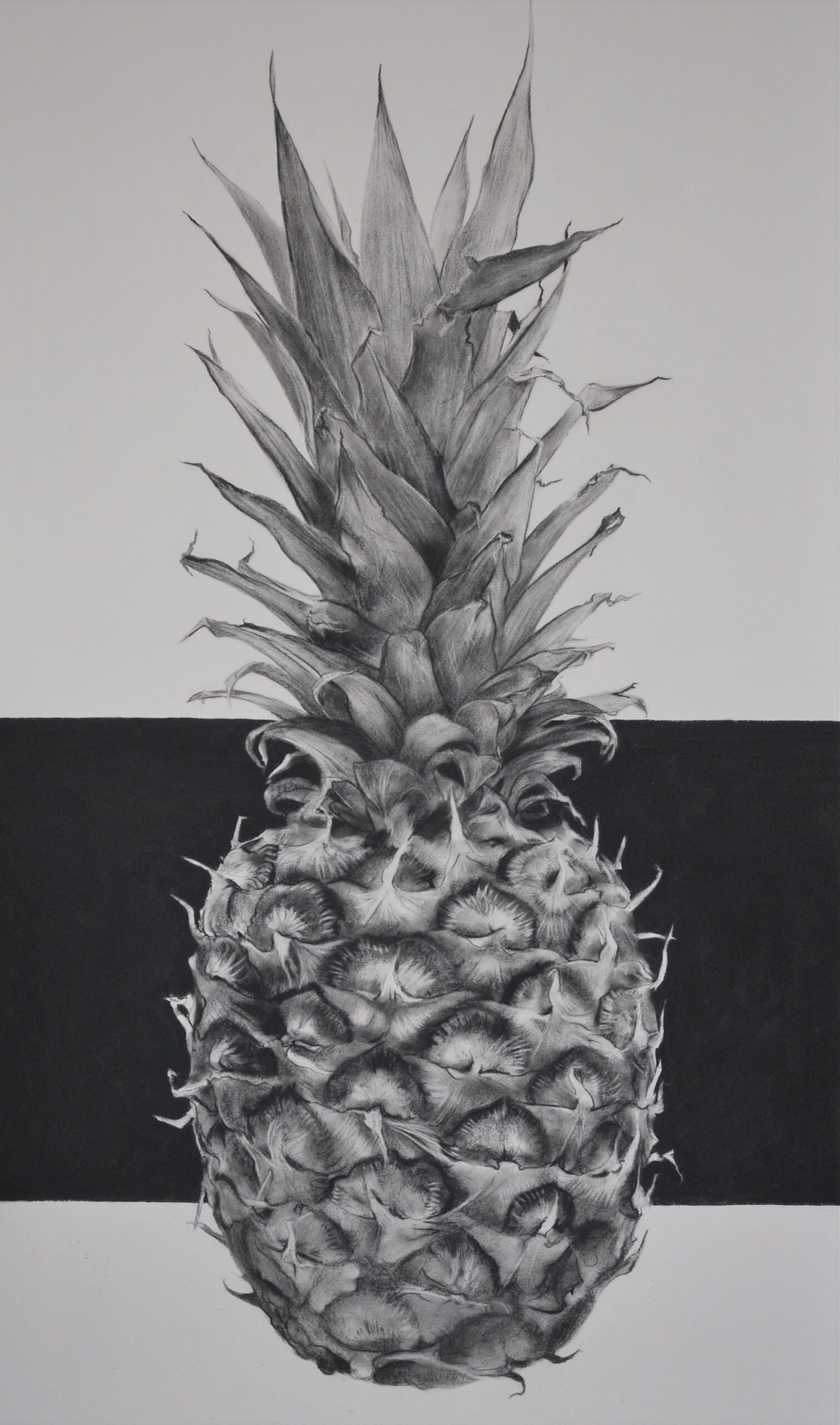 Charcoal drawing of a pineapple