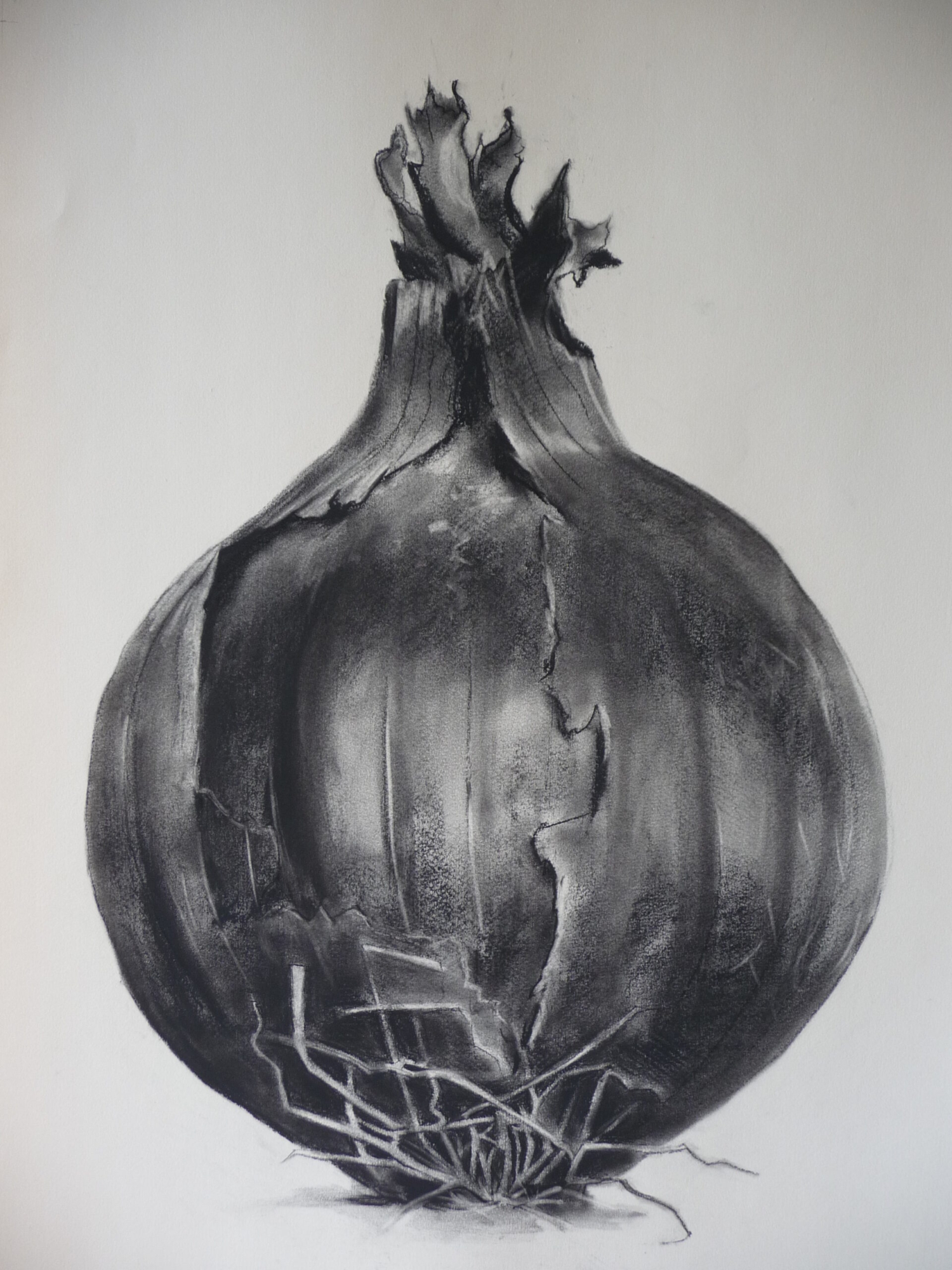 Charcoal drawing of a red onion