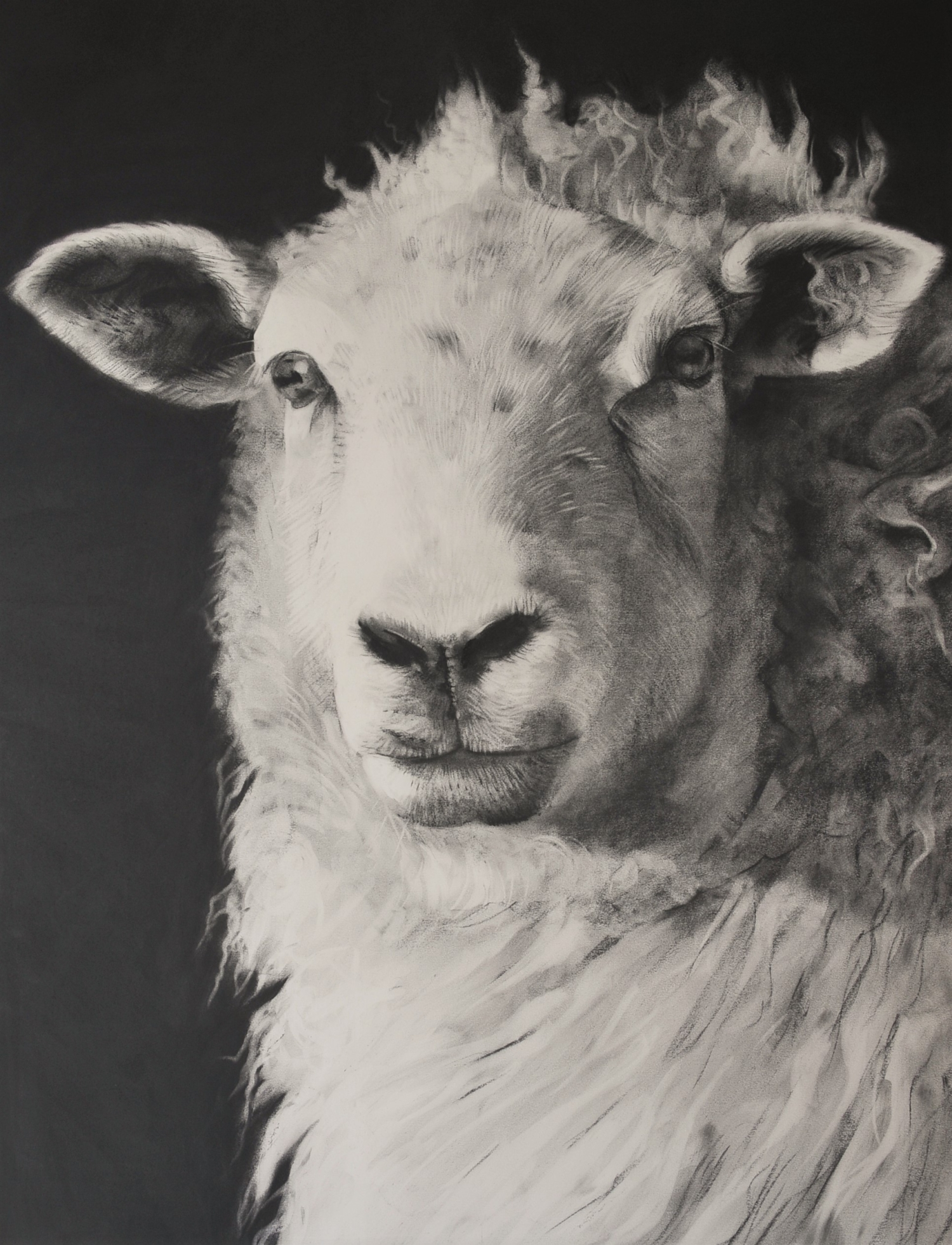 Charcoal drawing of a sheep portrait format