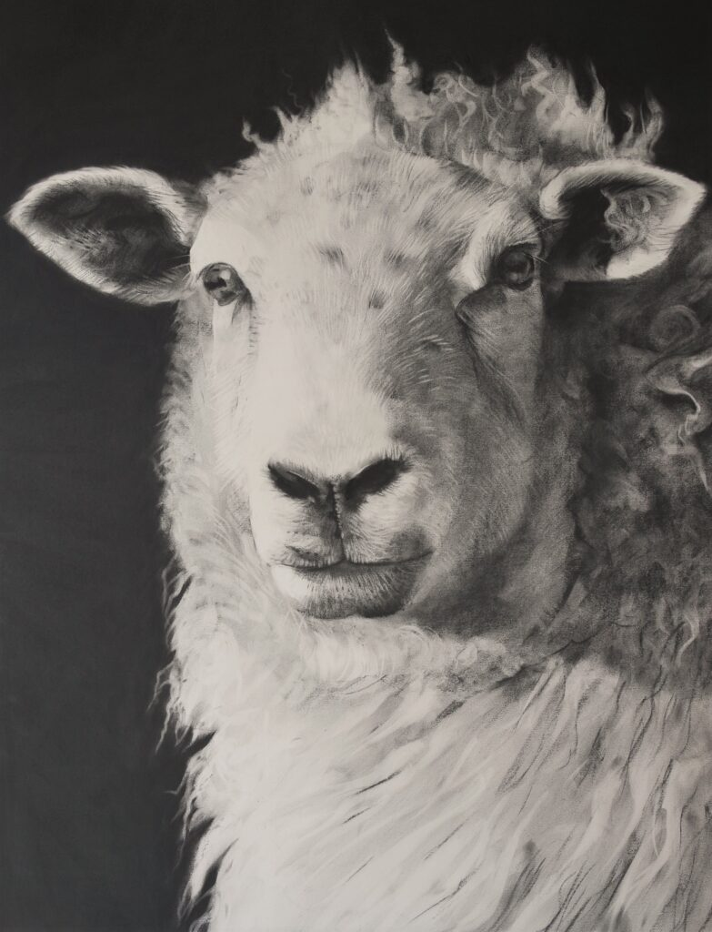 """Sheep [No.29]"" Charcoal on paper 