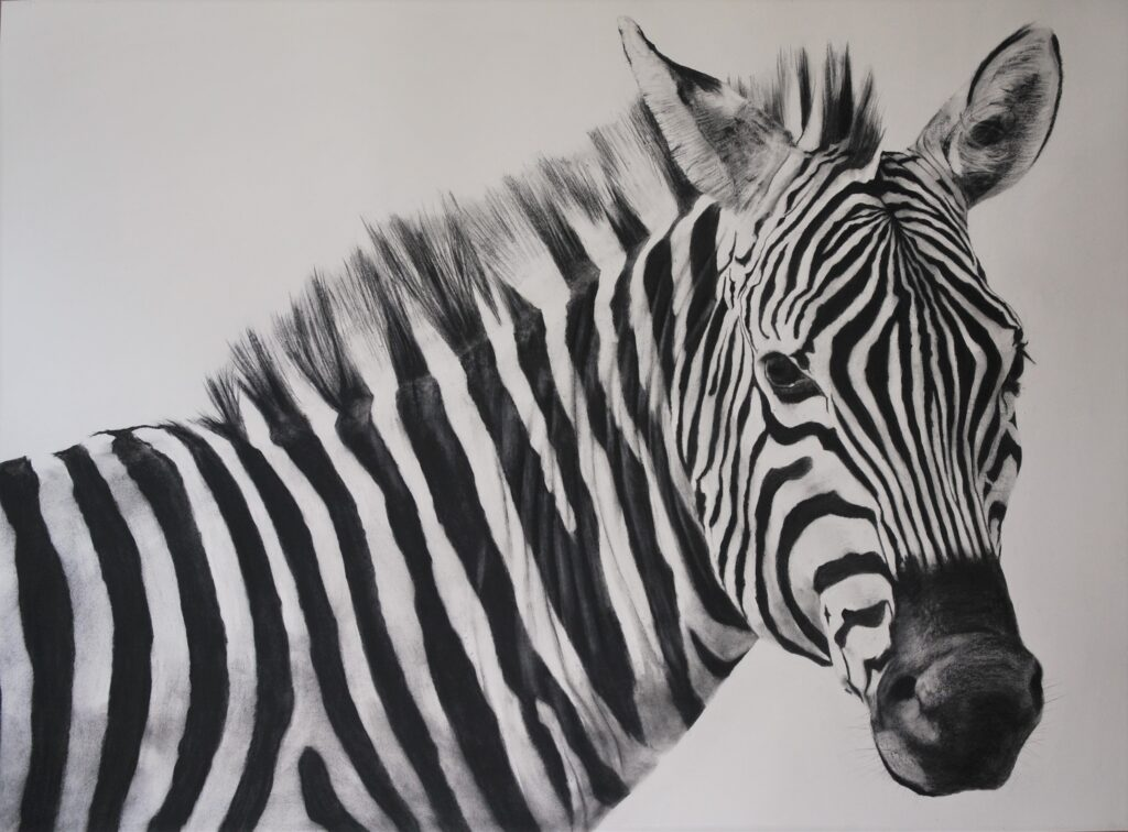 """Zebra II"" Charcoal on paper 