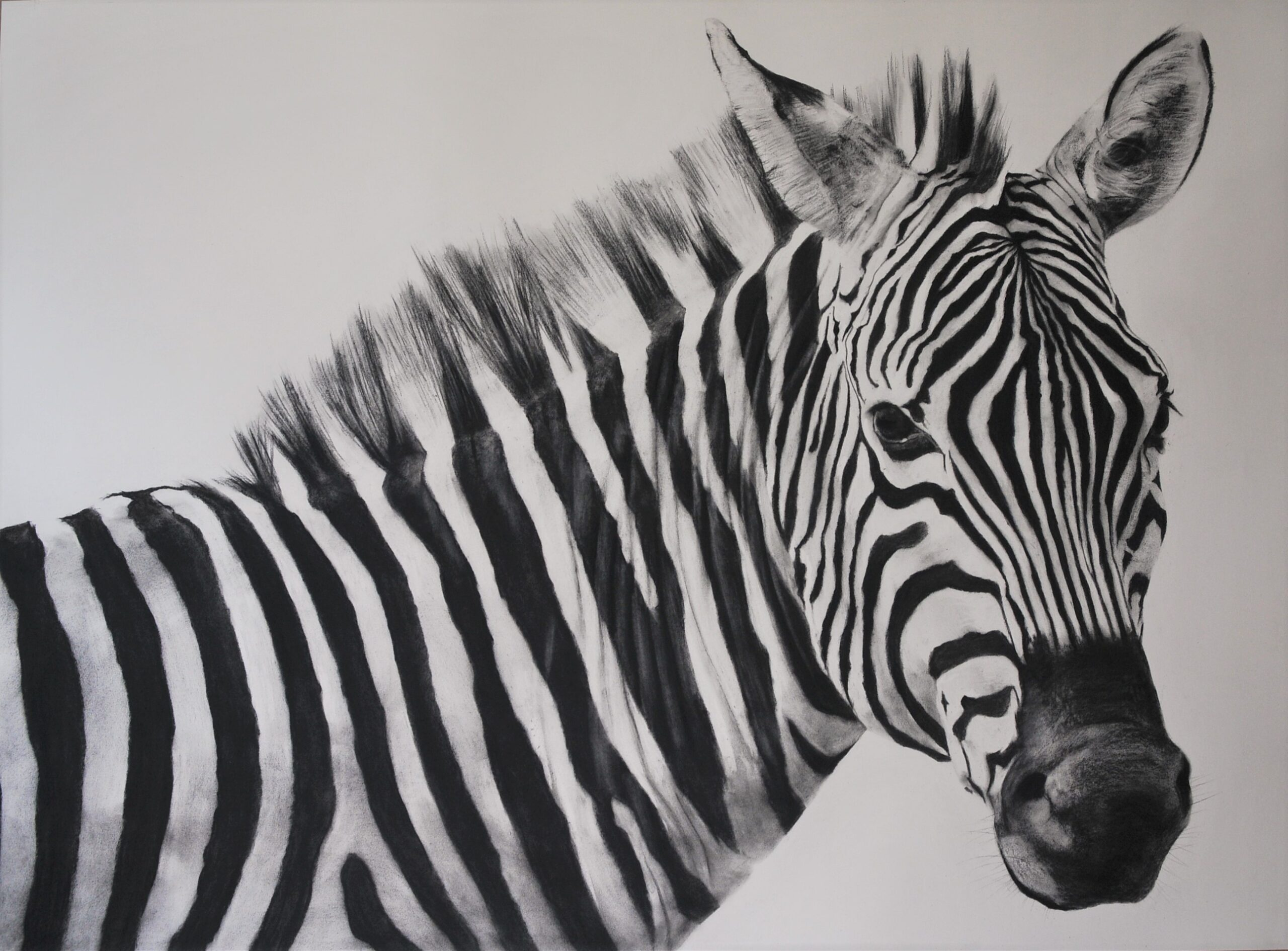 Charcoal drawing of a zebra